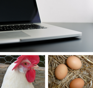 The Chicken or the Egg – How to Really Start an Online E-Course Business